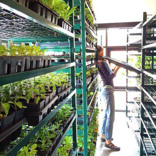 2015 - Plant Sale - Jess arranging shelves
