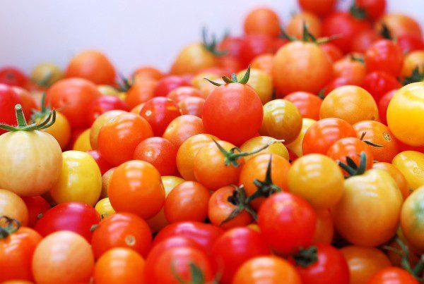 2011 - Closeup of DeLaney Cherry Tomatoes
