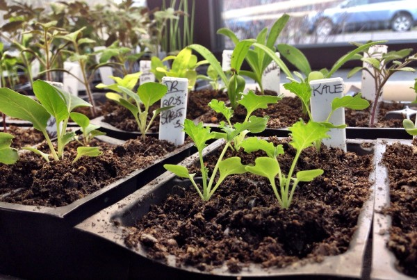 2014 - Starting Seeds in the DUG Office
