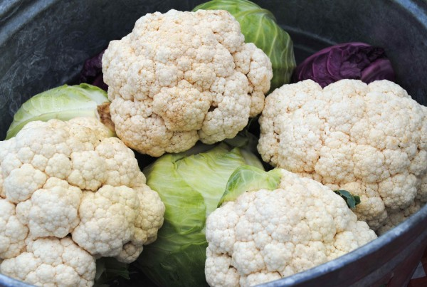 2011 - Cauliflower and Cabbages in Tubs at Fairview (Heidi Oberman) - LQ