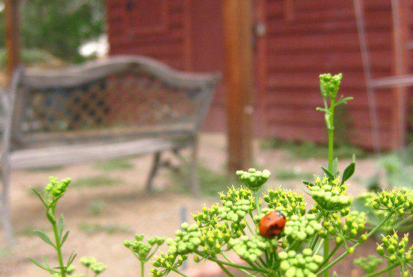2012 - Allison Community Garden - Ladybug