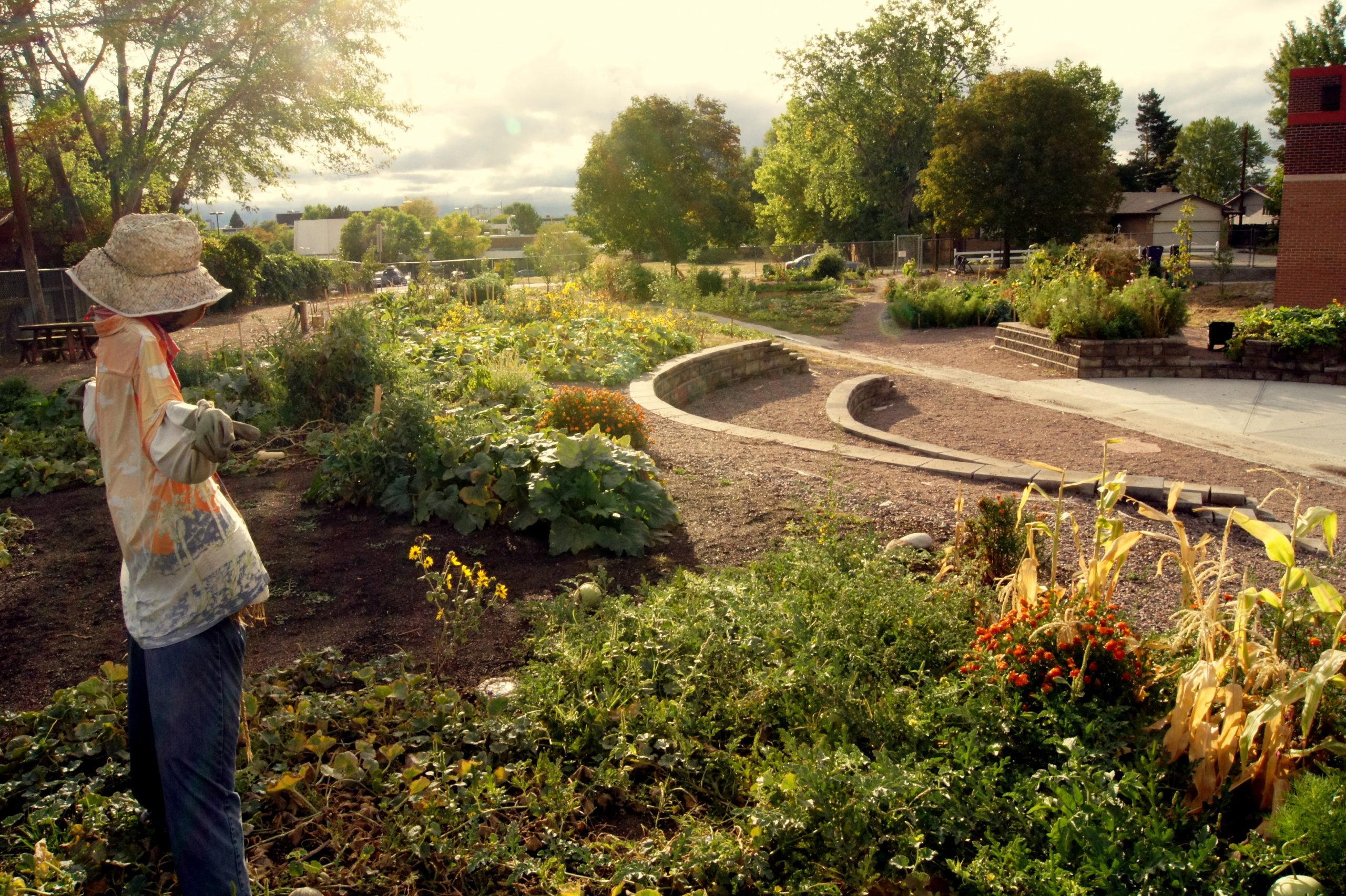Andrew\'s Community Garden at Denver Green School - Denver Urban Gardens