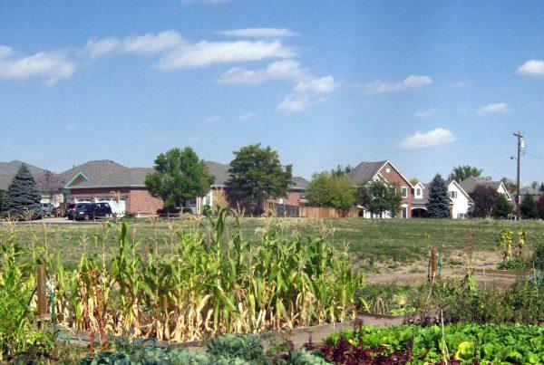 2012 -Mountain View Entire Garden