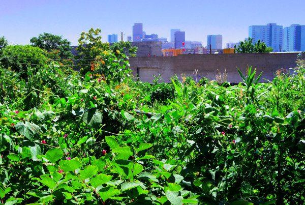 2014 - Pecos - Garden & Cityscape