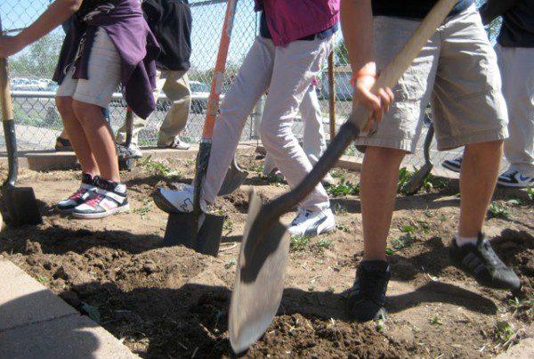 swansea shovelers