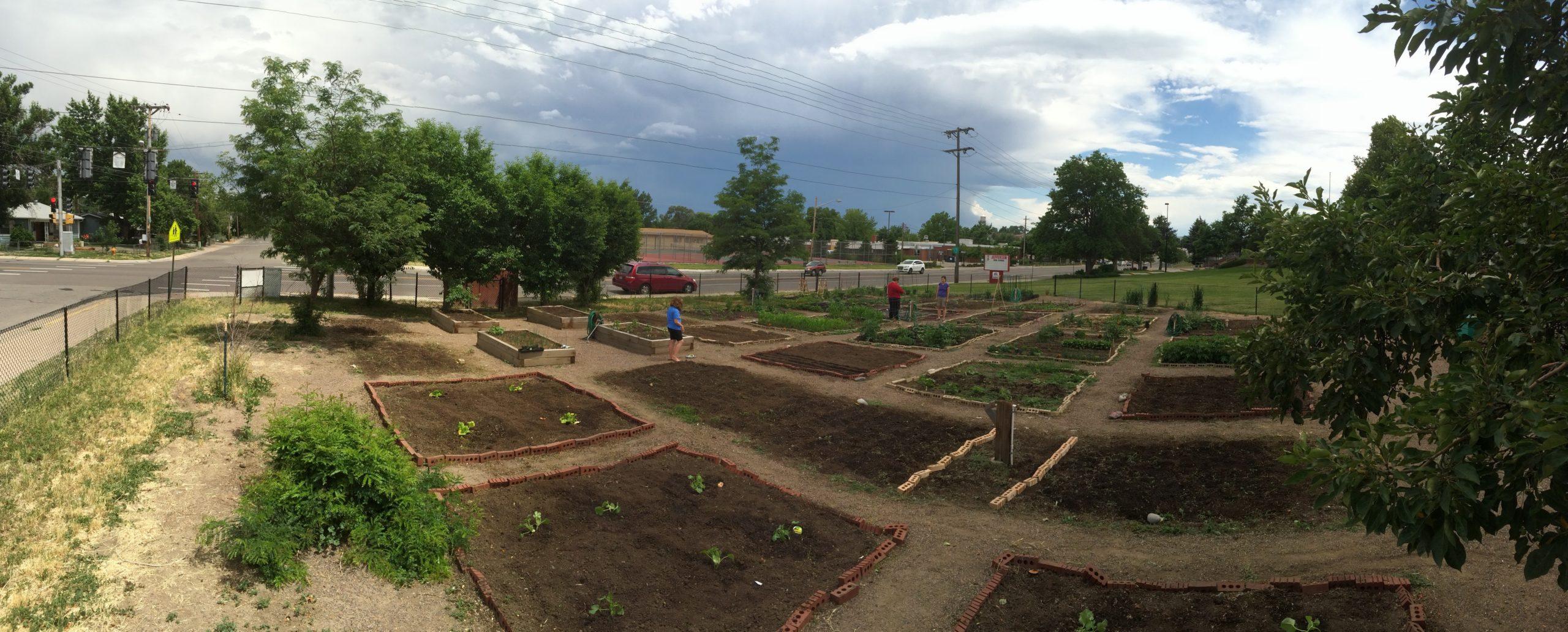Saints Community Garden at Jefferson High School - Denver Urban Gardens