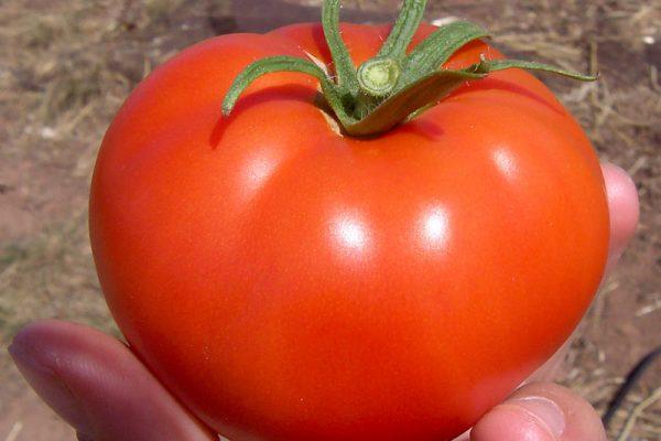 Homeslice Tomato
