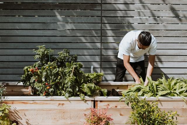 Plotting Your Garden Masterclass
