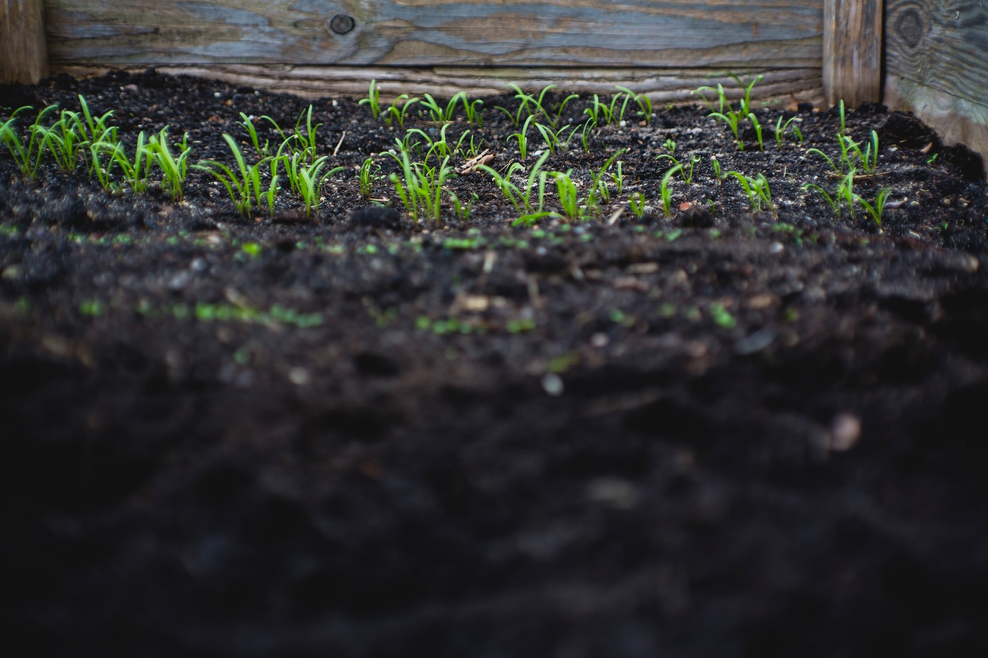 Purchase your cover crop seeds, compost and garlic for fall!